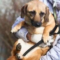 Очень маленькая ласковая собачка ищет дом, в г.Санкт-Петербург