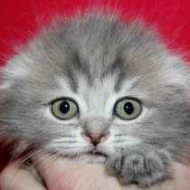 самый красивый котенок (есть ещё котята), в Санкт-Петербурге