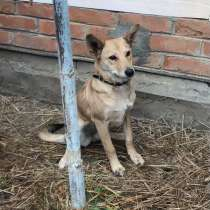 Собачка Рики, в г.Краснодар