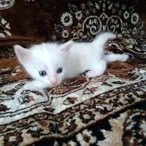 Отдам даром котят, в Севастополе
