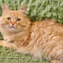 Рыжая солнечная котенок Злата в дар, в г.Москва