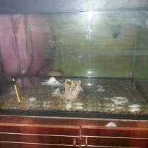 Продам аквариум 180 литров, в Кирове