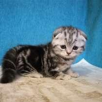 Шикарный котик, в г.Казань