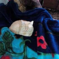 Рыжая кошка, в Улан-Удэ