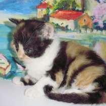 Яркая трехцветная кошечка, в г.Краснодар