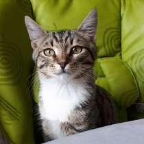 Маленький ангел, чудесный домашний котенок Кузя в добрые рук, в г.Москва