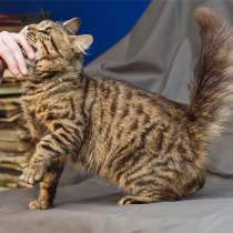 Он видит сердцем. Особенный молодой котик Маркус ищет дом, в Москве