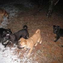 Для самых лучших щенков бесплатно лучшего хозяина, в г.Луганск