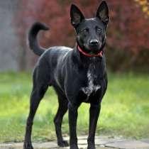 Молодой красивый пес Уголек в добрые руки, в г.Москва