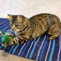 Красавец Тимофей,чудесный полосатый котик-клад в добрые руки, в Москве