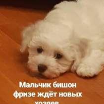 Белоснежное чудо в ваш дом, в г.Минск