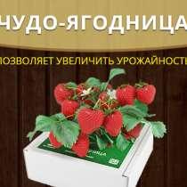 Чудо ягодница Сказочный сбор, в Нижнем Новгороде