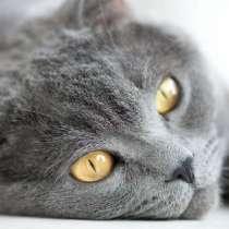 Ищу котёнка или котика, Рассмотрим все варианты, в г.Арнсберге
