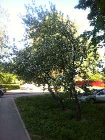 Продам квартиру в Ленинградской области, в Гатчине