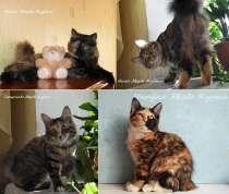 Высокопородные котята - кошечки Курильского бобтейла, в Иркутске