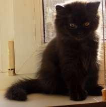 Красивые котята, в Краснодаре