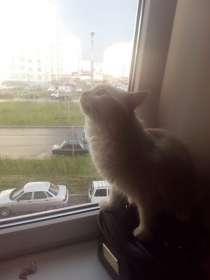 Отдам кота кастрированного, в Набережных Челнах