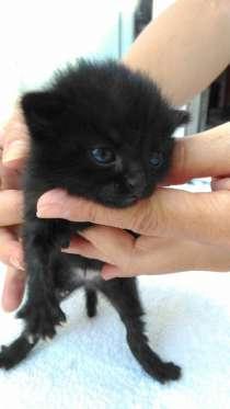 Пожалуйста возьмите котенка, в г.Тбилиси