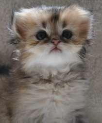 Удивительные котята, в г.Тимашевск