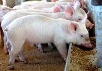 Комбикорм для свиней, в Красноярске