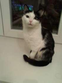 Отдам даром Кошка ищет дом, в Кемерове