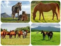 Куплю лошадей жеребят живым весом в беларуси, в г.Минск