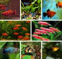 Мирные рыбки для Вашего аквариума, в Челябинске