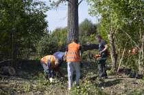 Спил дерев-вырубка леса, в г.Губкин