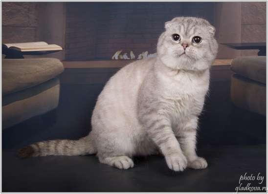 Вязка. Колорный кот открыт и ждёт страйточек