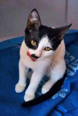 Веселый пиратик - котенок Зось ищет дом. в Москве Фото 2