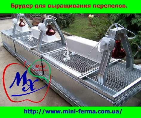 Перепелиная ферма - лучший домашний бизнес в г. Харьков Фото 1