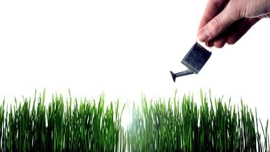 Канада Грин. газоны для ленивых. Canada Green. Grass Seed в Москве Фото 1