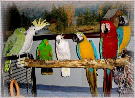 Приют для попугаев