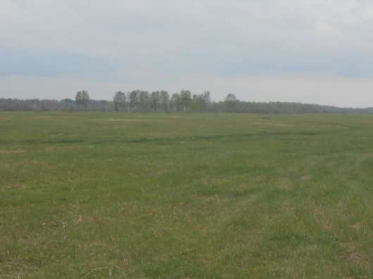 Продам шикарный участок 100 га в НСО у Кудряшовского бора