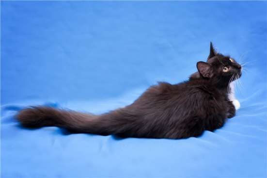 Котенок Нежа в дар, 4,5 мес