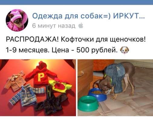 Одежда той-терьер собака щенок в Иркутске Фото 1