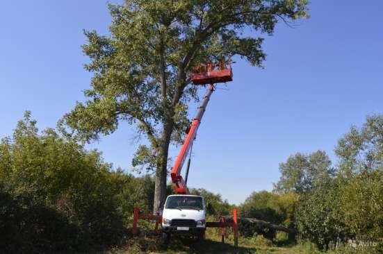 Спилить, удалить дерево в Щелково, Щелковском районе Фото 1