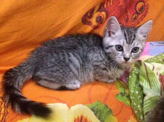 Продам котят в Новосибирске Фото 2