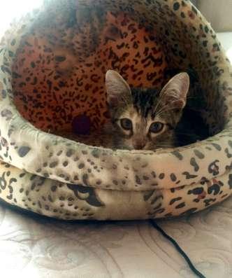 Милый котёнок в ласковые ручки, с добрым сердцем в г. Нальчик Фото 1