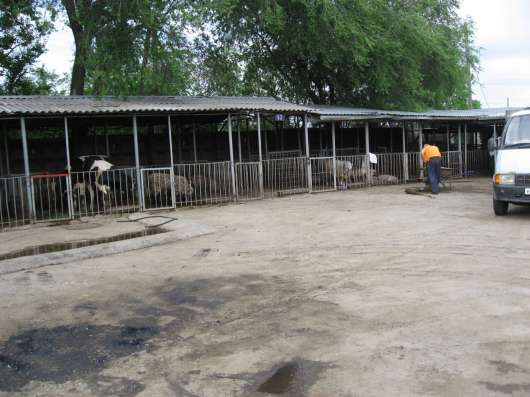 Производственная база в ст. Новотитаровской Динского района в Краснодаре Фото 1