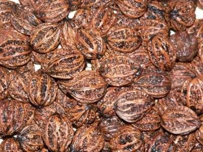 Плоды (семена) Маньчжурского ореха