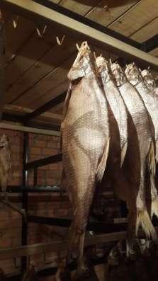 Рыбный цех г. Шахты реализует вяленую рыбу оптои и в розницу в Ростове-на-Дону Фото 4