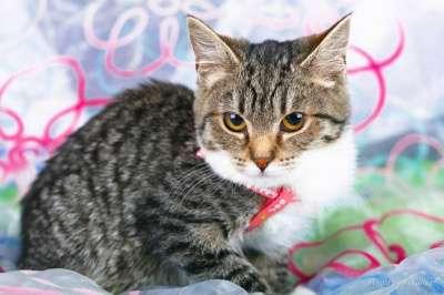 Отдам даром Любознательный котенок Стефан ищет дом.