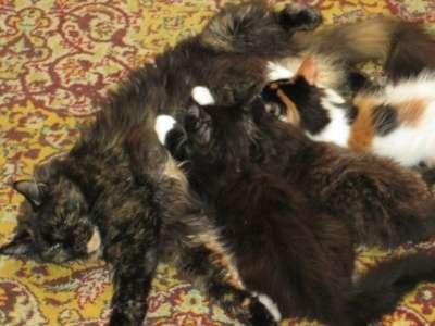 котята в Красноярске Фото 1