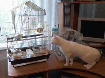 клетку для птиц