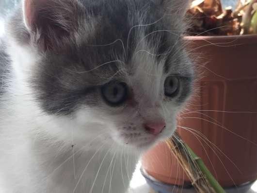 Милые котята ищут дом в Ижевске Фото 2