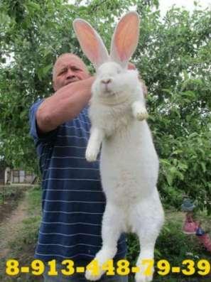 Куплю кроликов в Красноярске