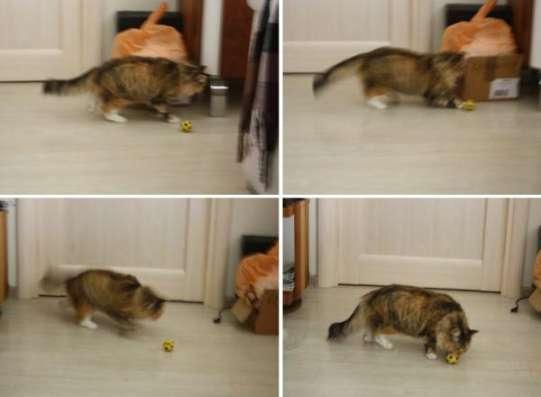 Особенная кошка Муся пушистая красавица в поисках дома.