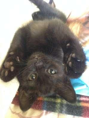 Котята в добрые руки! в Дубне Фото 3