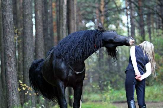 Фотосессия с лошадьми! в Красноярске Фото 2